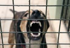 В Звениговском районе объявлен карантин по бешенству