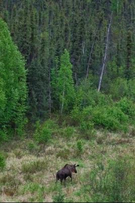 Прогулка по лесу постер