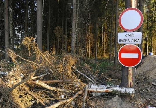 В Марий Эл спиленное дерево убило лесоруба