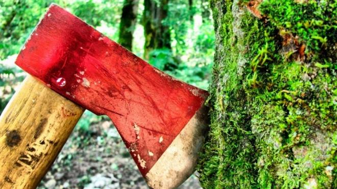В Советском районе задержали «черных лесорубов»