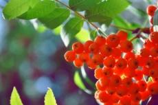 Жителям Марий Эл предлагают выбрать зелёный символ нашего региона
