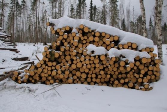 Карательные санкции против «черных» лесорубов решили ужесточить