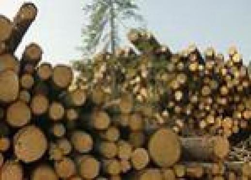Кировские депутаты высоко оценили работу спецподразделения милиции по борьбе с хищениями леса, созданного в Марий Эл