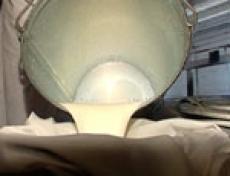 В Марий Эл идет борьба за качество молока