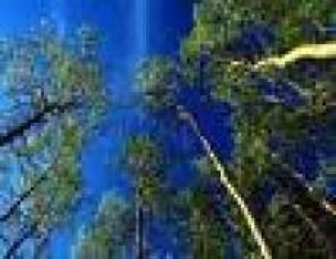 В лесах Марий Эл объявлен III класс пожарной опасности