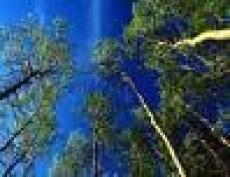 В Марий Эл задержали «черного лесоруба»