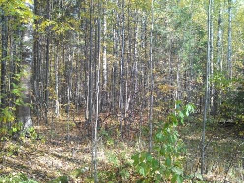 В лесах Марий Эл пропали две пожилые женщины