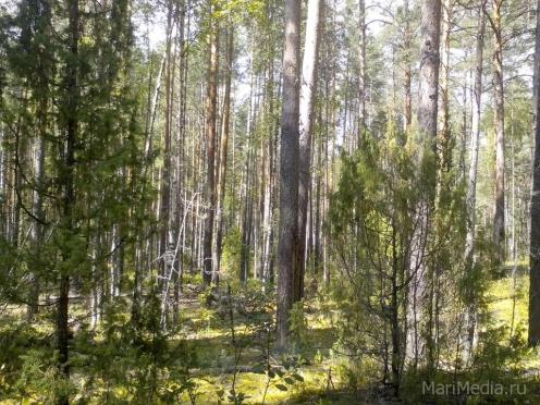 Леса Марий Эл закрывают для свободного посещения