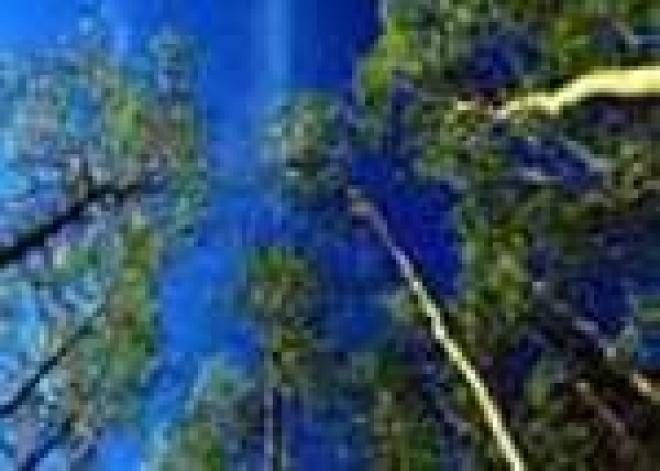 Лесофонд Марий Эл пополнится на 3,5 млн. деревьев