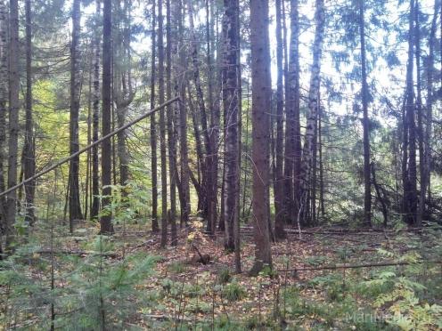 В лесном массиве Медведевского района потерялся 86-летний грибник