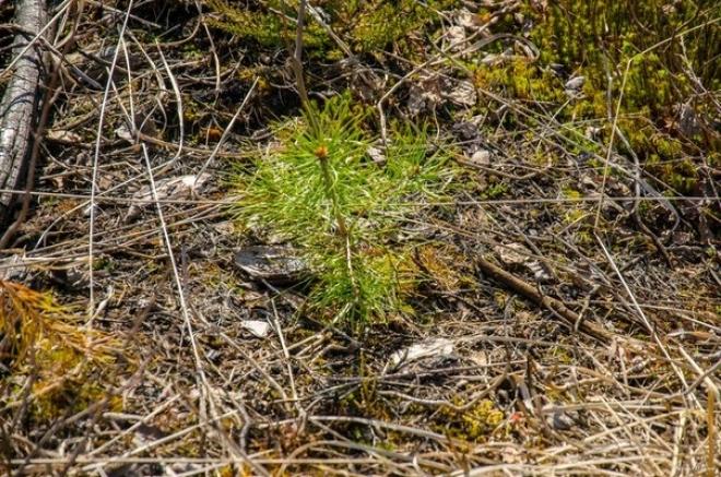 Йошкаролинцам предлагают самостоятельно заняться лесовосстановлением