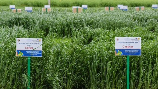 Делегация Марий Эл отправилась на выставку полевого формата в Татарстан