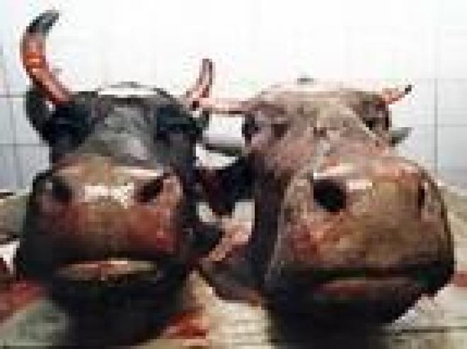 В Марий Эл участились случаи кражи домашнего скота
