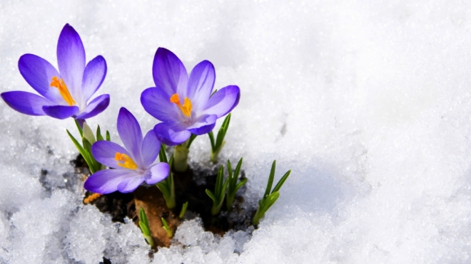 8 марта в Марий Эл — пасмурно и прохладно