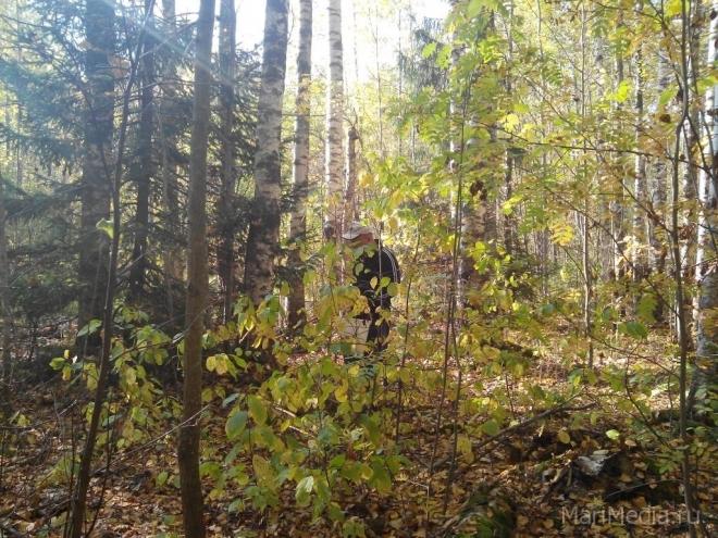 Спасатели Марий Эл 15 раз выезжали на поиск людей, пропавших в лесу