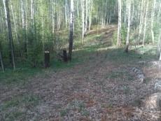 В Марий Эл незаконно вырублено около 1000 кубометров древесины