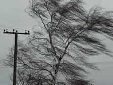 МЧС предупреждает об усилении ветра в Марий Эл