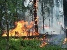 Пожарный Марий Эл в одиночку потушил пожар в лесу