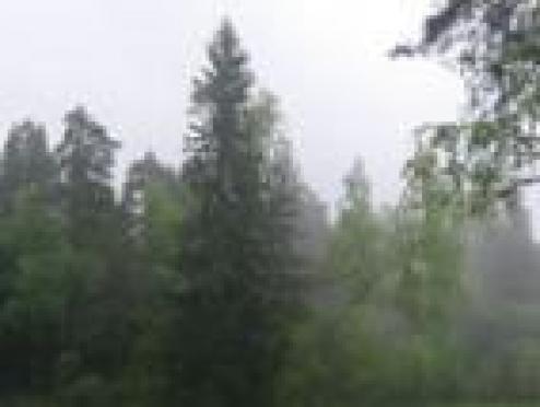 Дождь и пасмурная погода в Марий Эл помогли стабилизировать ситуацию с лесными пожарами