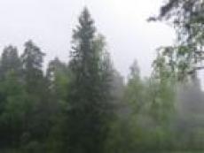 Леса Марий Эл открыли для посещений