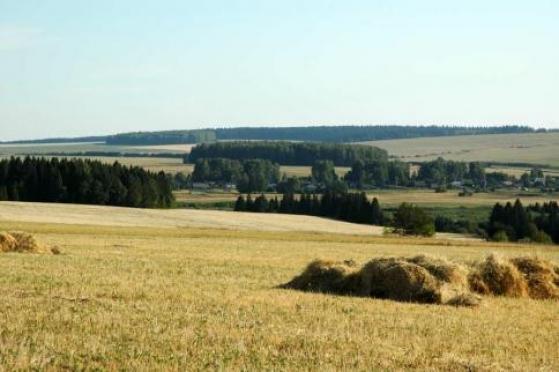 Половина зерновых в Марий Эл уже убрана