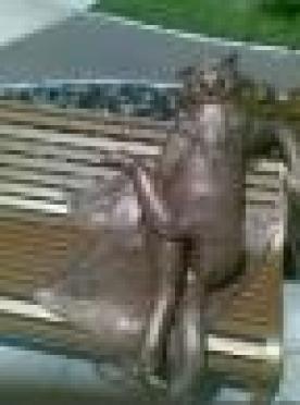 «Йошкин кот» прописался на законных основаниях в Йошкар-Оле
