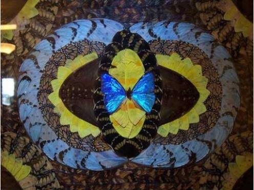 Картины, выполненные из крыльев бабочек, смогут увидеть жители Йошкар-Олы