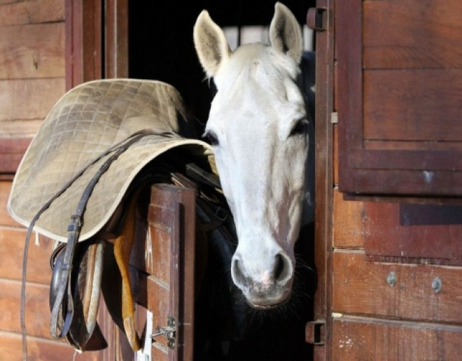 В майские праздники в Марий Эл крали даже лошадиные седла
