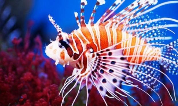 В Йошкар-Оле проходит выставка экзотических рыб