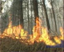 Лесные пожары обошлись Марий Эл в 70,5 миллионов рублей