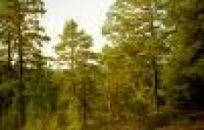 Леса Марий Эл закрывают для посещения