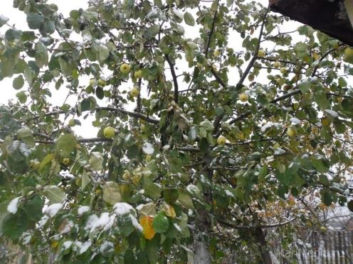 Первый снег в Марий Эл выпадет на следующей неделе