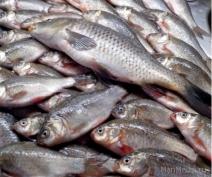 В Юринском районе задержали браконьеров со свежевыловленной рыбой