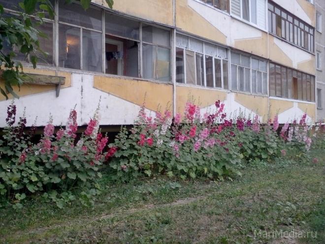 Йошкар-Олу накроют цветочным ковром