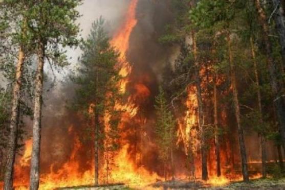 Йошкаролинцы уехали в Туву тушить лесные пожары
