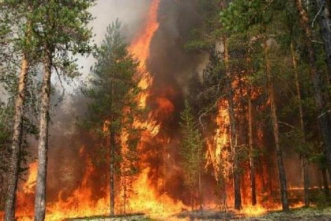 За выходные в Марий Эл произошло 2 лесных пожара