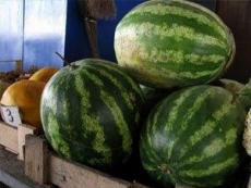Администрация Йошкар-Олы штрафует торговцев арбузами