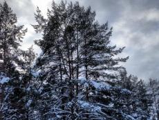 С нового года учитывать древесину будут по новым правилам