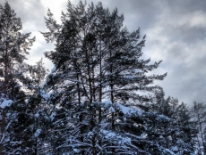 Служебный подлог обойдется участковому лесничему в 10 тысяч рублей