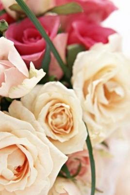 Радуга цветов постер