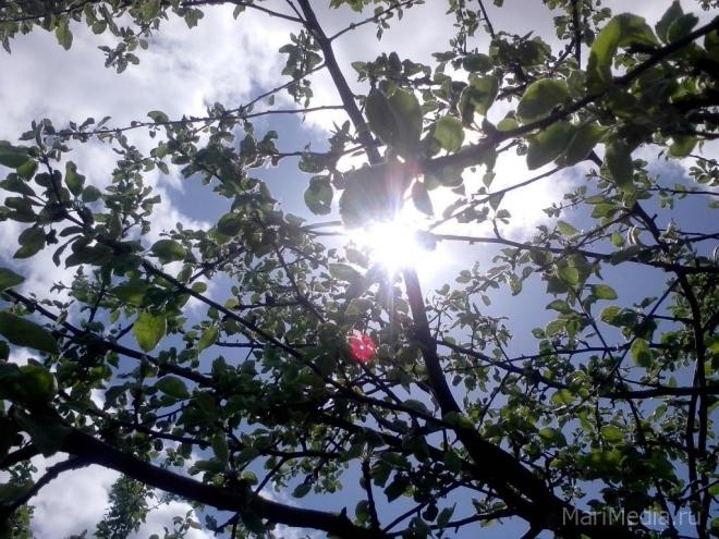 В выходные в Марий Эл ожидается до плюс 31 °С