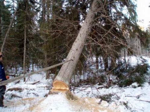 В Килемарском районе мужчина погиб при валке леса
