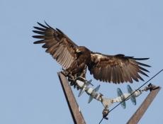 В Марий Эл линии электропередачи оборудованы защитой от птиц