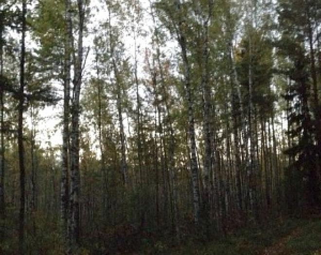 Поступления в бюджет за использование лесов Марий Эл составляет в этом году более 75 миллионов рублей