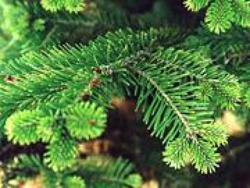 В Марий Эл введен запрет на свободное посещение лесов