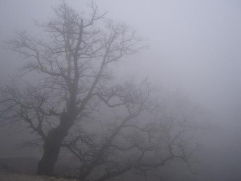 В Марий Эл сегодня туман с видимостью менее 500 метров