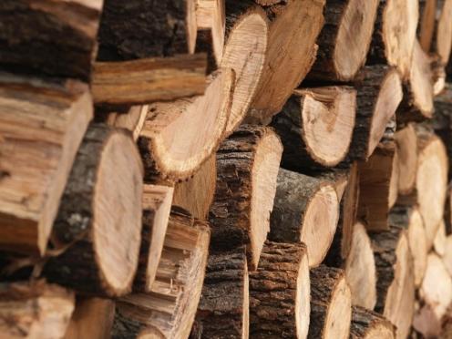 Очередных черных лесорубов, нанесших урон на сотни тысяч, задержали в Марий Эл