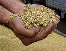 В Марий Эл установлена предельная цена на «стратегическое» зерно