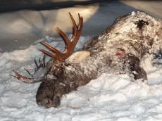 В Марий Эл на сотни тысяч рублей оштрафованы браконьеры