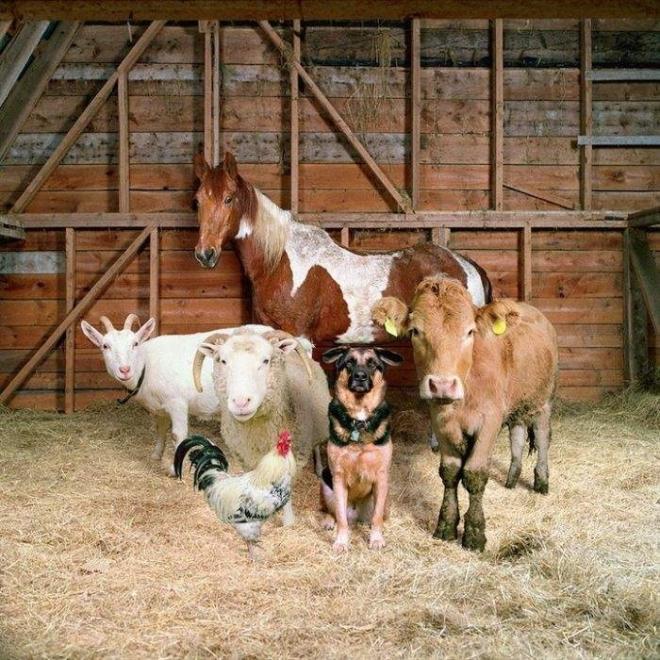 В Марий Эл перепишут скот, птицу, пчел, пушных зверей и сельхозугодья
